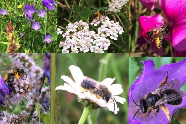 180404_bloemen met bijen