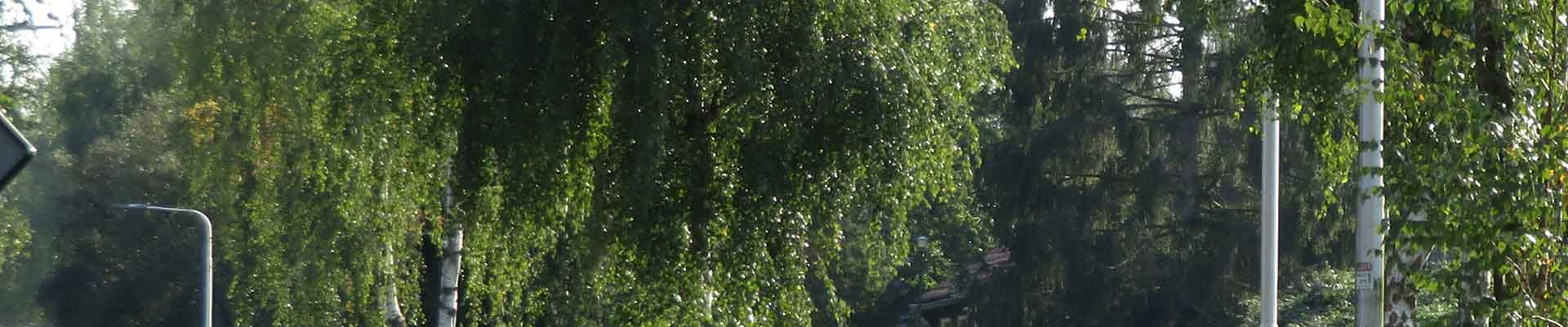 Acute Bomenkap langs de Tolakkerweg (N417)