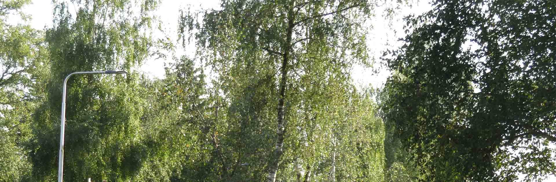 Bomenkap langs de Tolakkerweg stopgezet