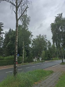 Tolakkerweg: bomen worden geveld