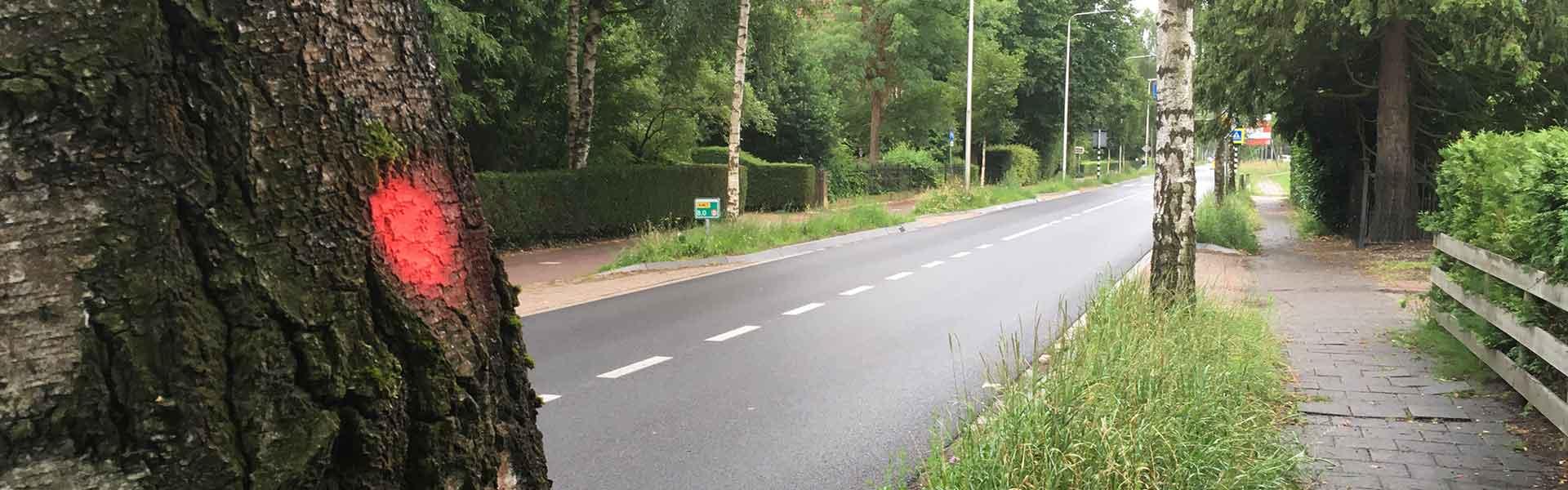 Vellen verkeersonveilige bomen Tolakkerweg